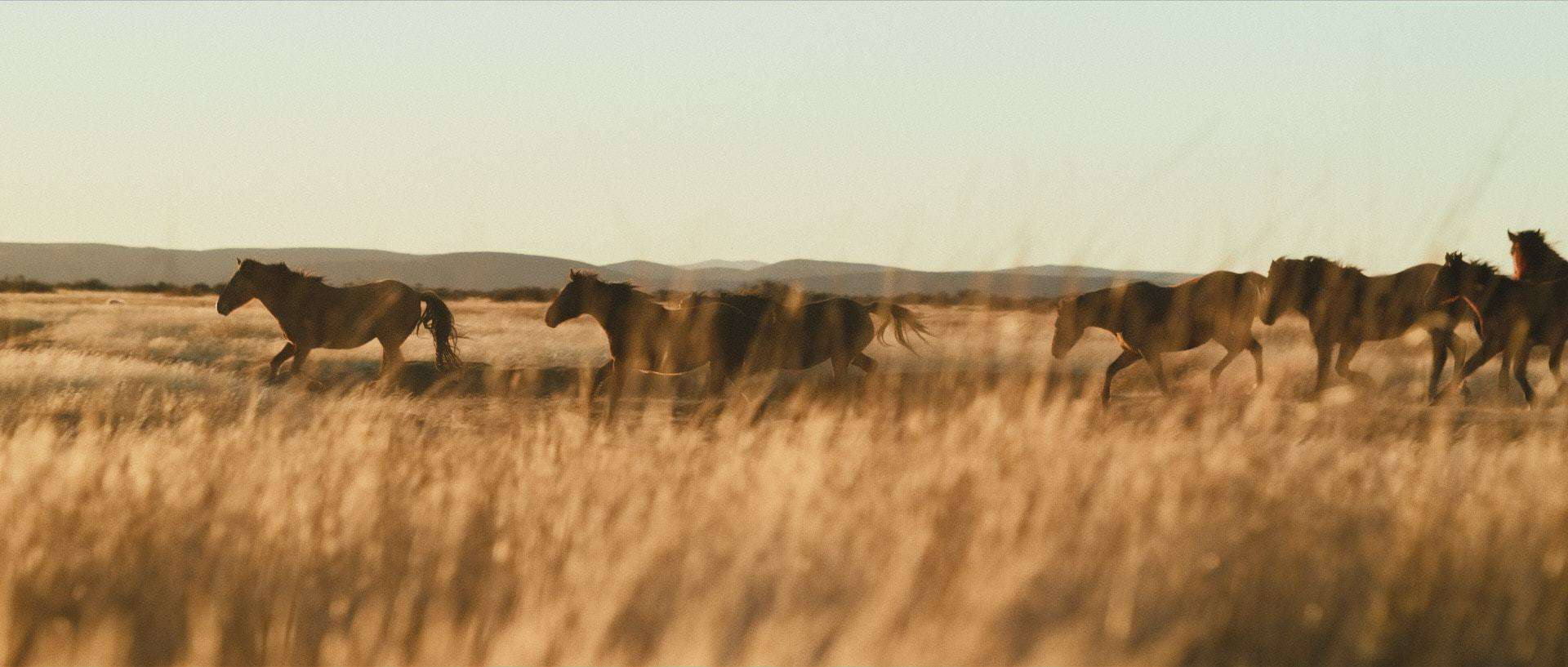 "Wild horses gallop in front of the camera under beautiful Patagonian light - Still frame from the documentary ""Land of The Wind"""